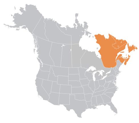 Aurora Plastics Quebec and Eastern Canada