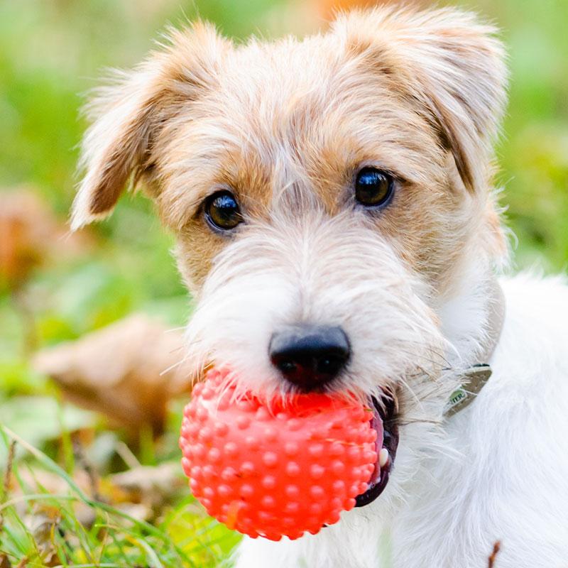 Dog Toy Plastic Compounds